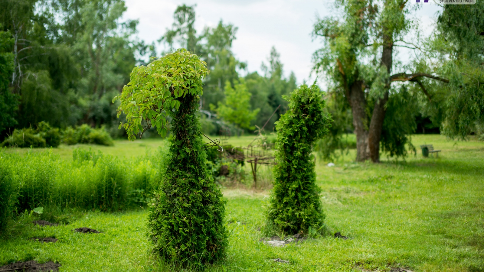 The ladies with umbrellas are to be restored this autumn, as well as the other topiary art objects (Botanical garden in Chișinău)