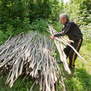 The Forest Code and poplar plantations. How Moldova was preparing for the forest sector reforms