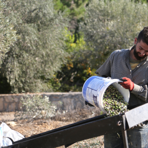 EU-funded LIVINGAGRO project launched to better combine agriculture and forestry in the Mediterranean