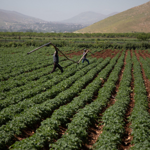 Making agriculture more water-efficient: the EU-funded PROSIM project to test innovative solutions in Jordan