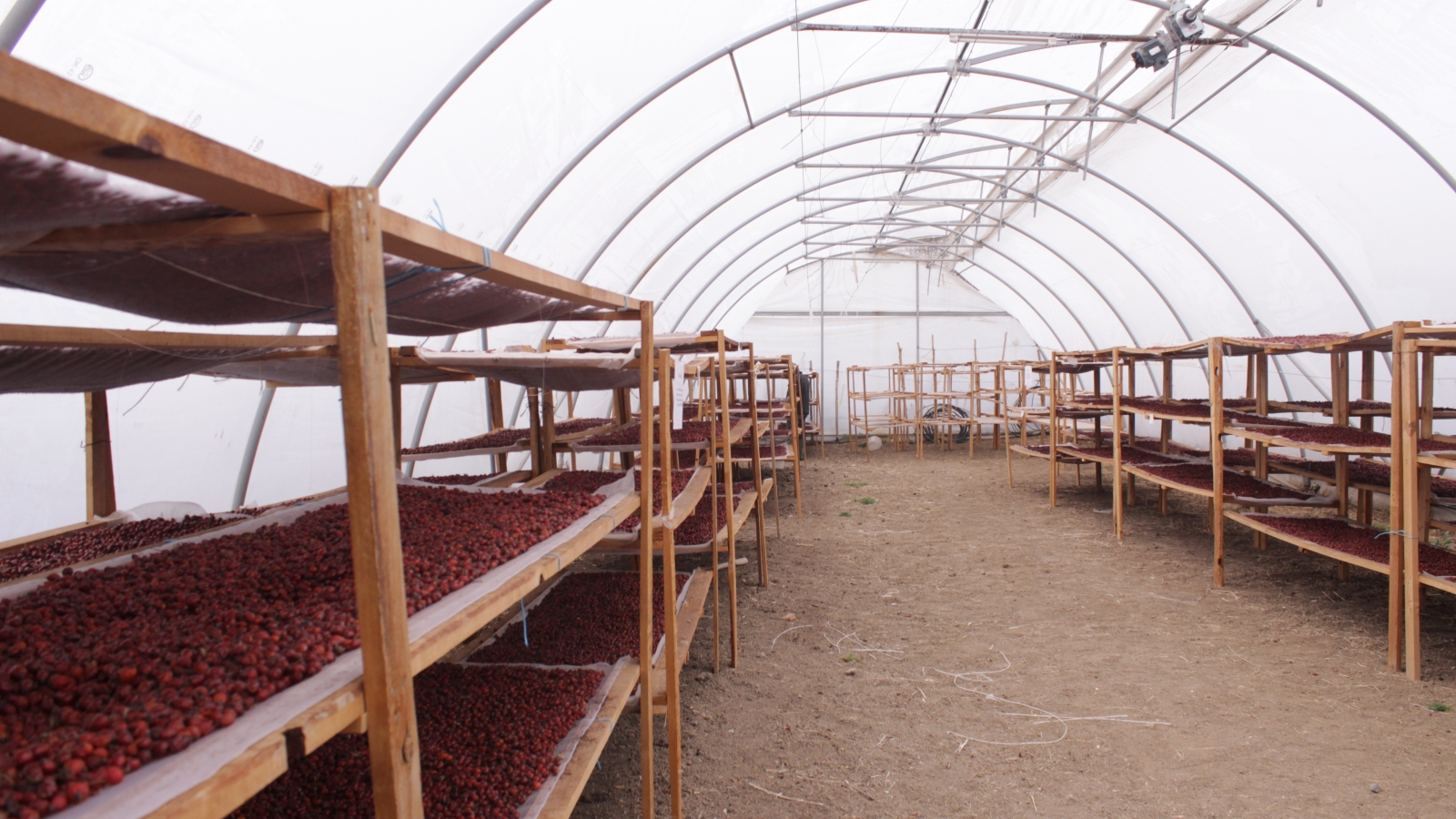"Inside the green house of the agricultural cooperative ""Gifts of a Forest"""