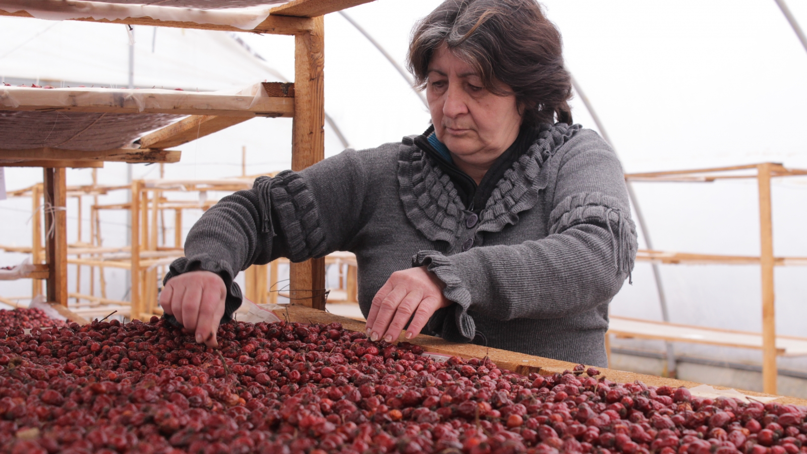Lia Kekelishvili, one of the founder of agricultural cooperative