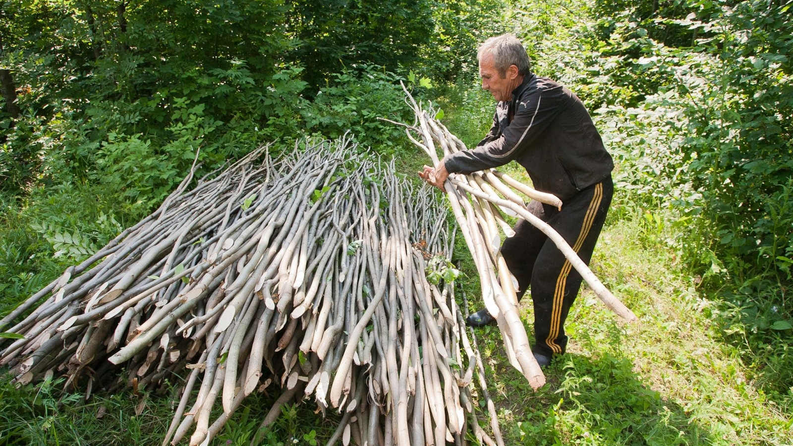 A villager, who collects sticks that locals use for gardens and grapevines. Straseni district, Moldova (Credit: FLEG programme)