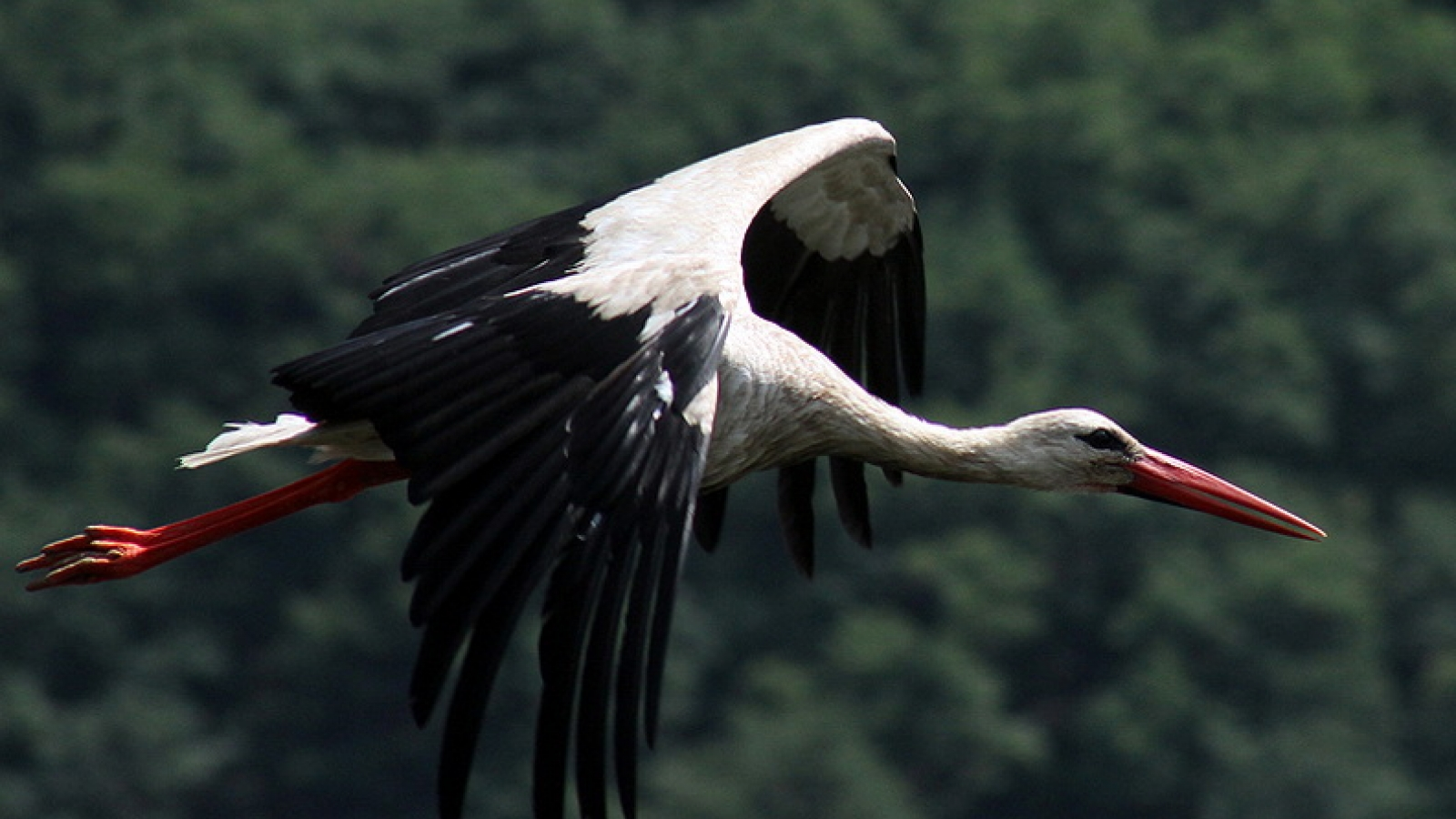 Stork. Khmelnytskyy Region, the Dniester Canyon, Ukraine (Credit: Roman Malko)