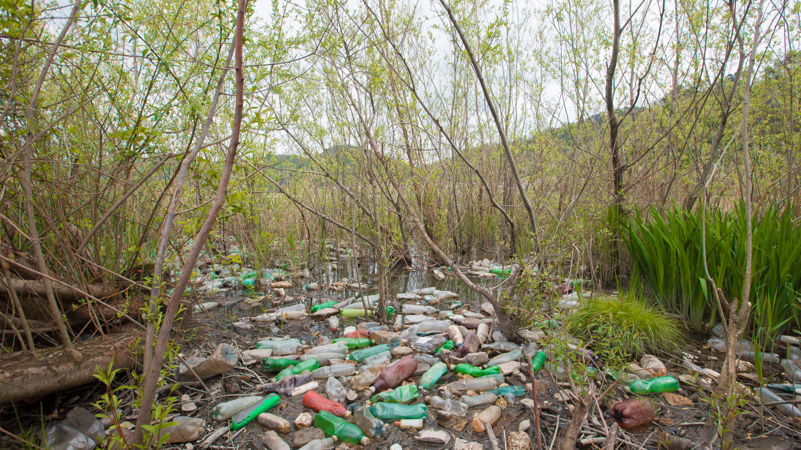 Plastic waste on Rioni River bank (April 2019)