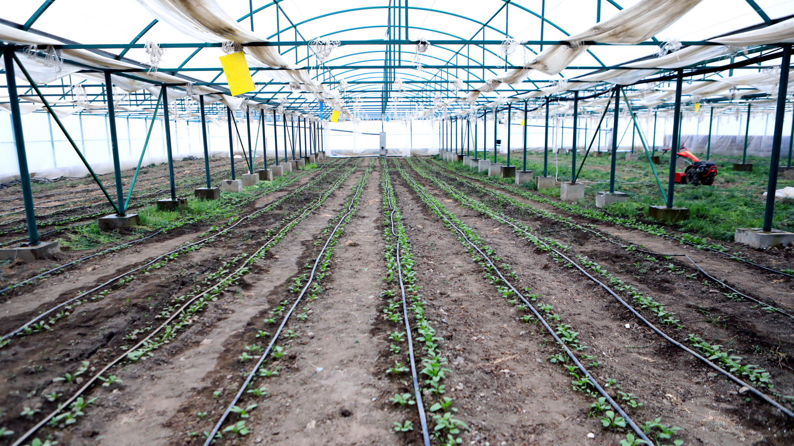 Greenhouse heated with biogas in Geghamasar