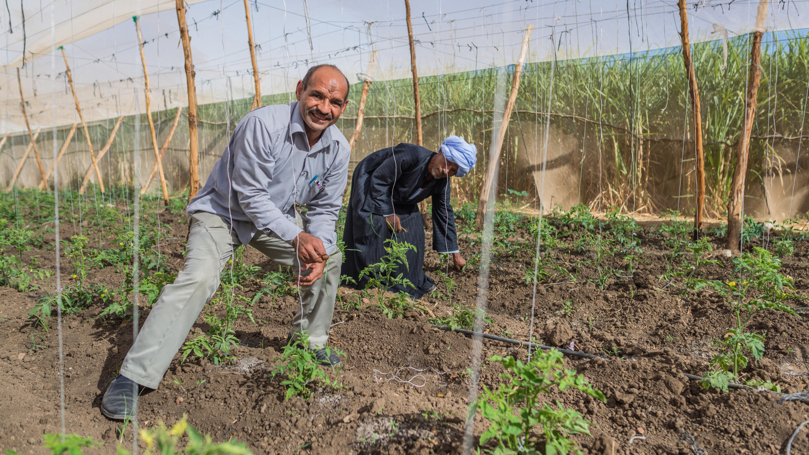 Less water for more sustainable irrigation: start of the EU-funded PROSIM project