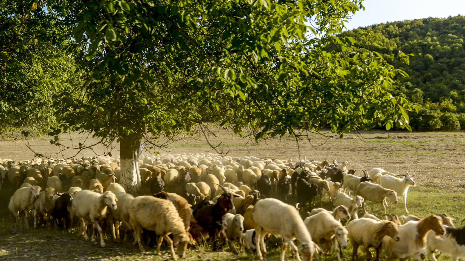 Good, clean and fair  food: How the EU supports agriculture and biodiversity in Azerbaijan